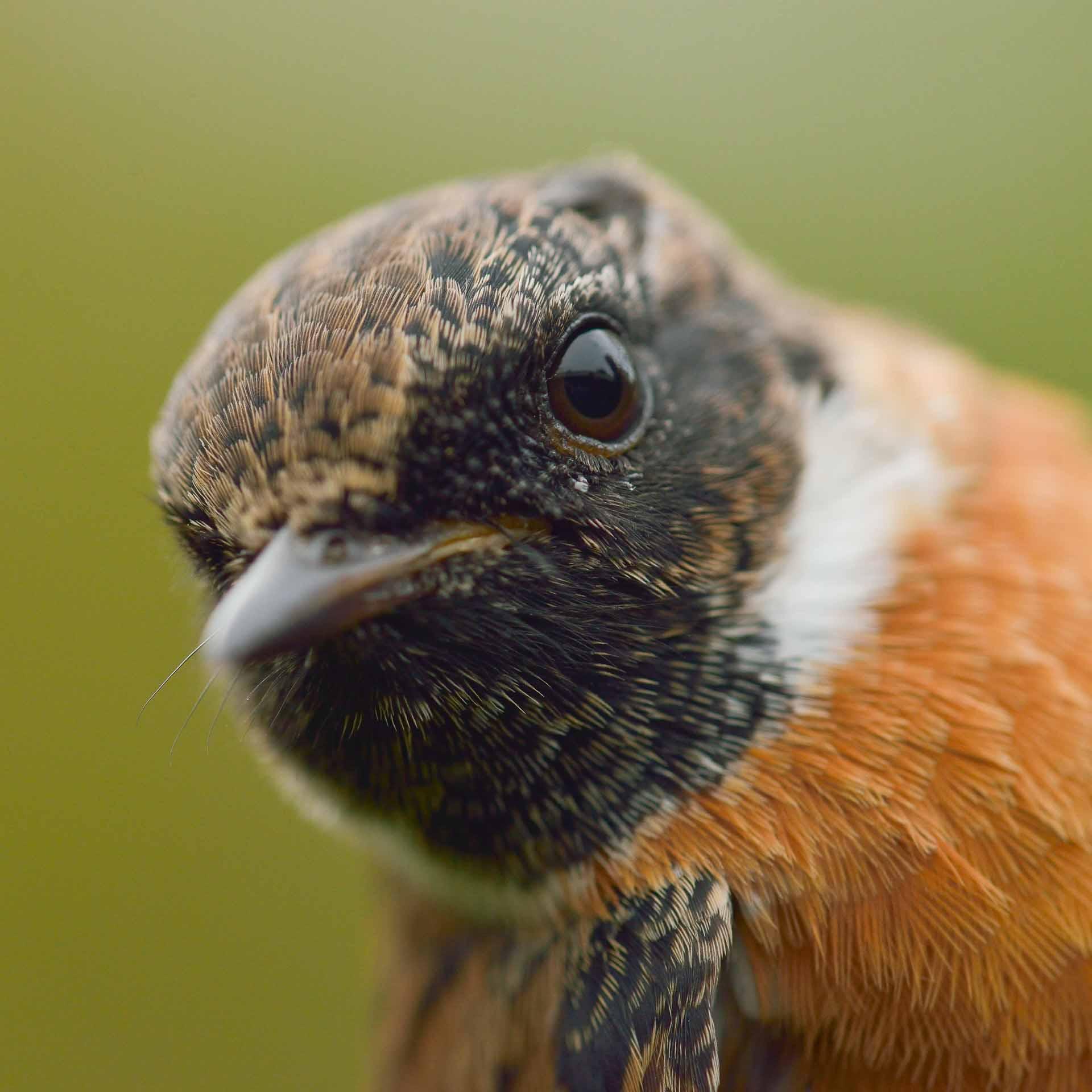 fotoreis fotoworkshop natuurfotografie schiermonnikoog vogelfotografie landschapsfotografie lapwing travels